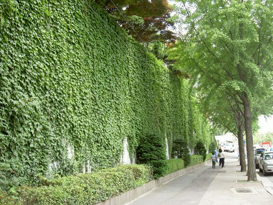 서울시, 2011년 벽면녹화 사업 추진계획 [라펜트 조경뉴스]